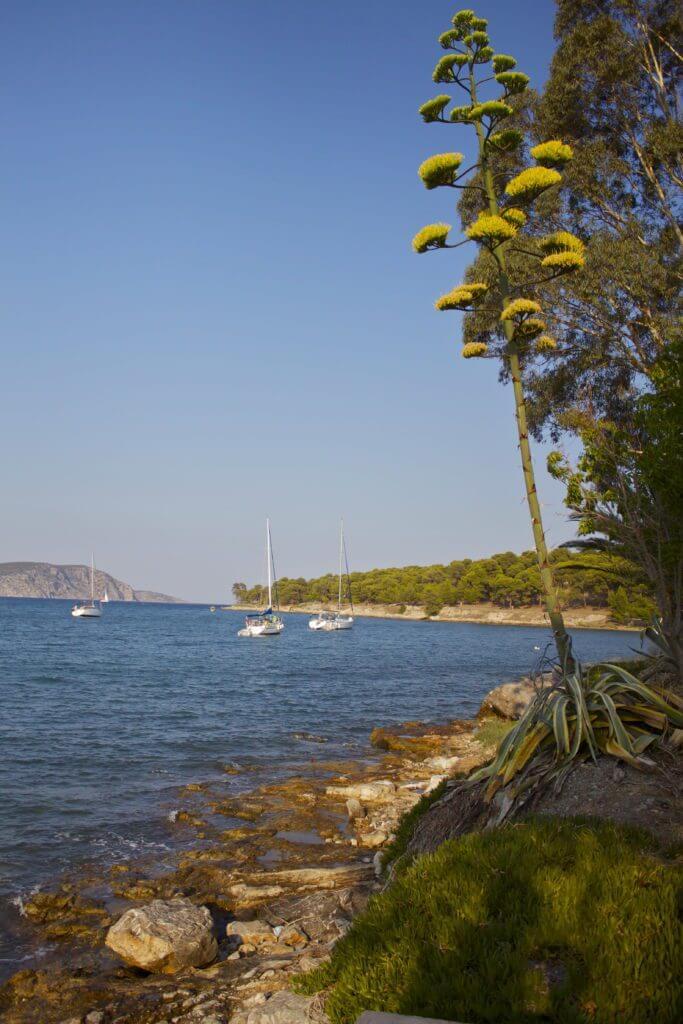 Ermioni. Peloponeso. Grecia.
