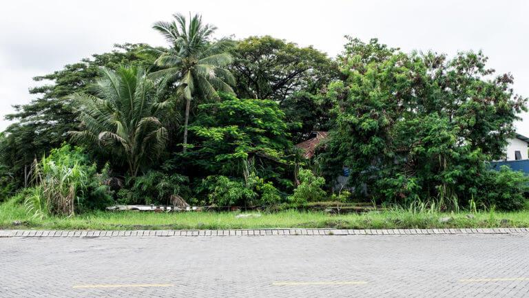 Vegetación Frondosa en las calles de la ciudad de Manado, al norte de Sulawesi
