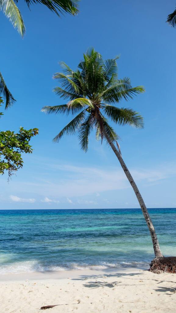 Palmera solitaria en la isla de Malenge de las Togean