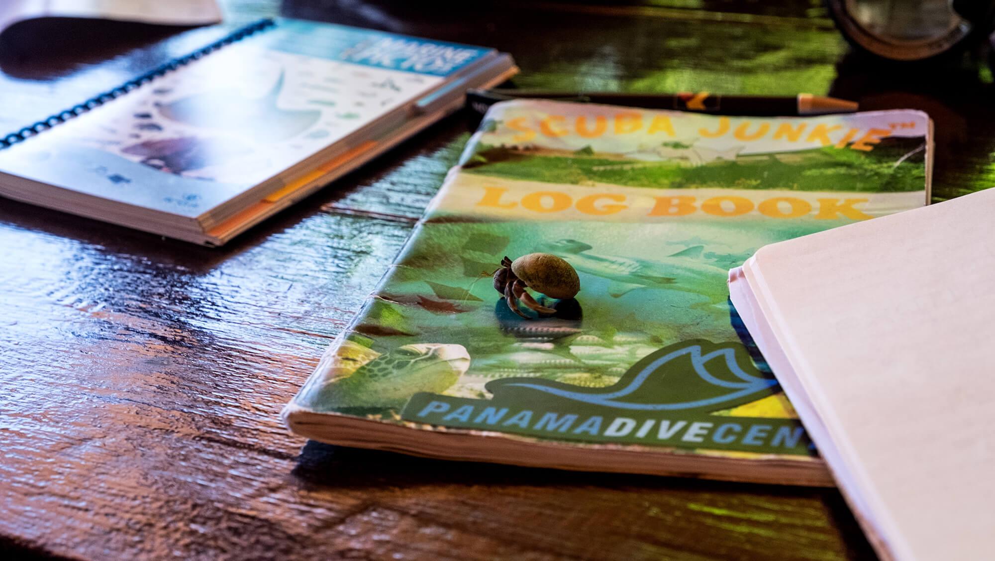 Ermitaño paseando por el diveLog o libro de buceo en la isla de Malenge