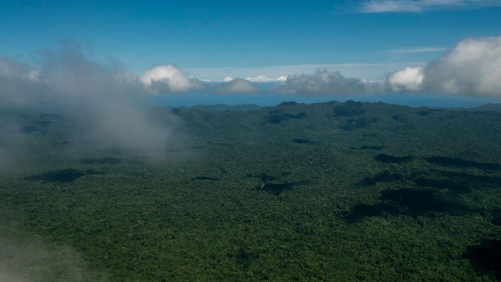 Sobrevolando la selva de Papúa a vista de pájaro