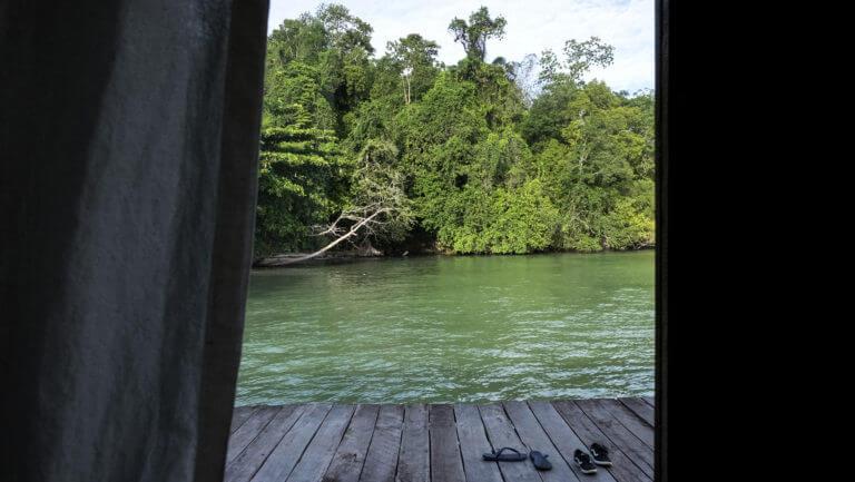 Manglares alrededor de las cabañas de Raja Ampat en Papúa