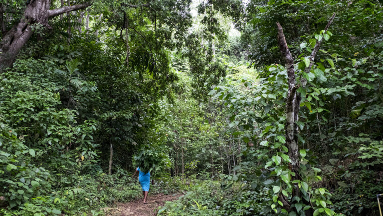 Señora con hierba en los bosques selváticos en Raja Ampat en Papúa, parte Indonesia