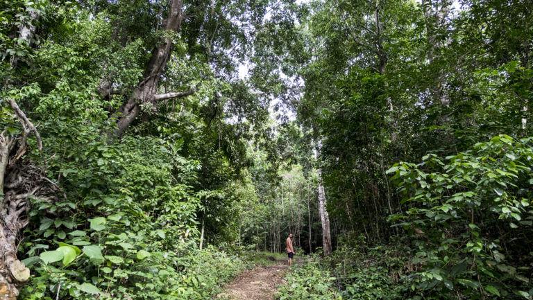 Bosques selváticos en Raja Ampat en Papúa, parte Indonesia