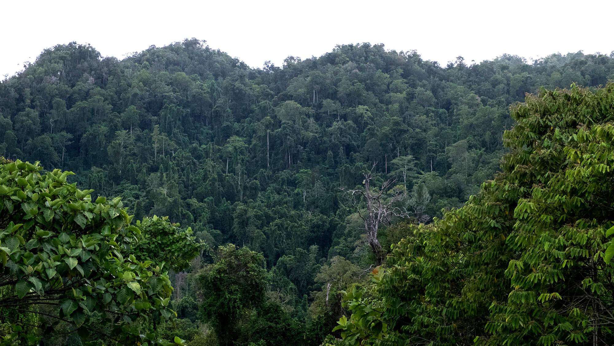 Selva virgen en la isla de Papúa en Indonesia