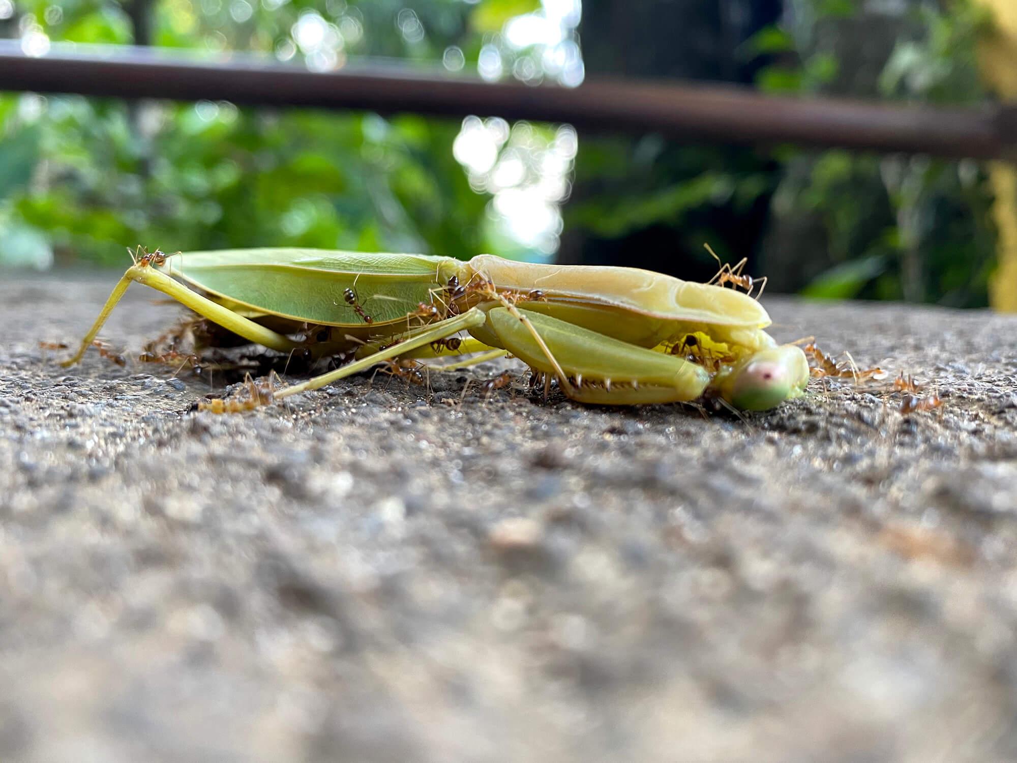 Insectos variopintos en Raja Ampat en Papúa - Indonesia
