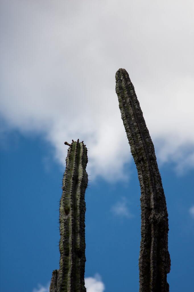 Cactus en la ruta a las cascadas petrificadas de Oaxaca