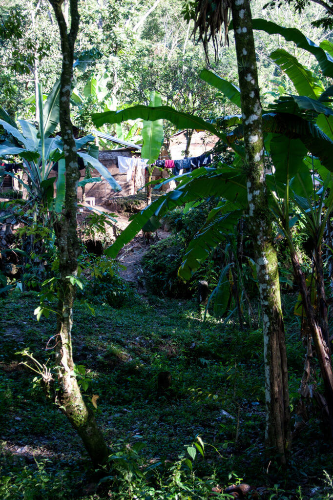 Alrededores de las cascadas de Agua Azul de Chiapas